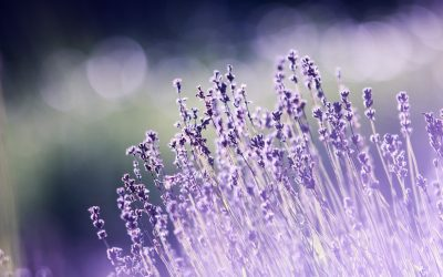 Aromatherapy reduces the risk of car accidents